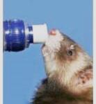 Hydratez-les !