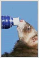 Insolation : Hydratez-les !