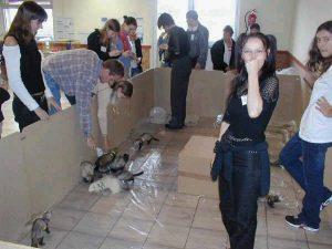 Evènements du CFAF en 2004