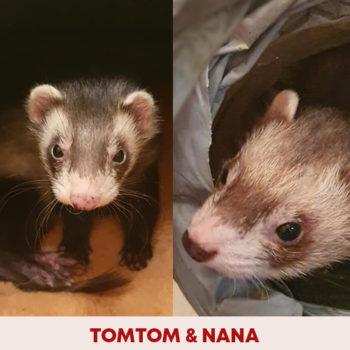 tomtom_nana