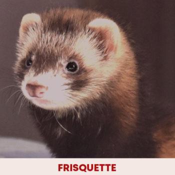 frisquette