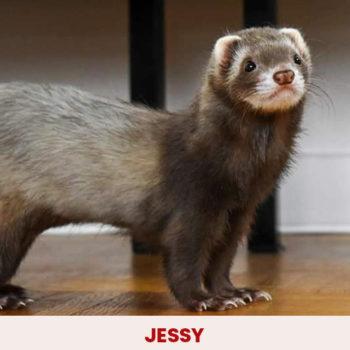 jessy2